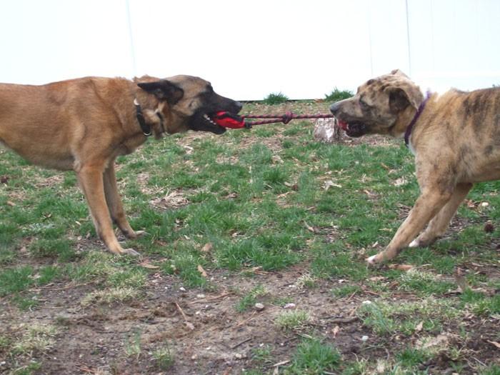 Richmond Va Dog Training Classes